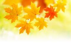秋天构成离开黄色 图库摄影