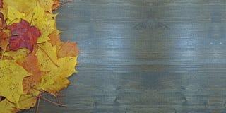 秋天构成,几片槭树叶子 免版税库存图片
