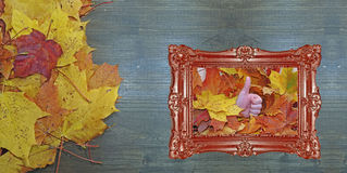 秋天构成,几片槭树叶子 库存照片