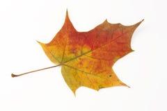 秋天构成 免版税图库摄影