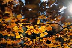 秋天林冠层 库存图片