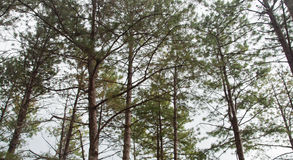 秋天林木 本质绿色木阳光背景 免版税库存图片