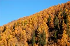 秋天林木 库存照片