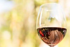 秋天果子和胡说的反射在杯酒 图库摄影