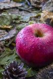 秋天果子构成 图库摄影