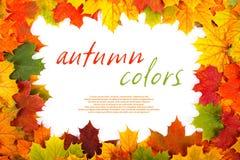 秋天枫叶边界 库存图片