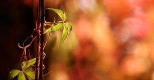 秋天柔和的淡色彩 免版税库存照片