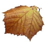 秋天查出的前片叶子 免版税库存照片