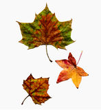 秋天查出被设置的叶子 免版税库存照片