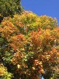 秋天树上面 库存图片