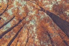 秋天树上面 免版税库存图片