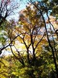 秋天树临近GATLINBURG,田纳西 图库摄影