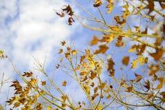 秋天树五颜六色的叶子背景 库存照片