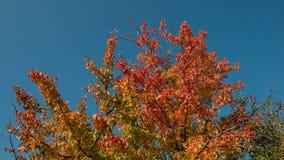 秋天树分支和叶子  免版税图库摄影