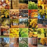 秋天树叶子五颜六色的拼贴画  库存照片
