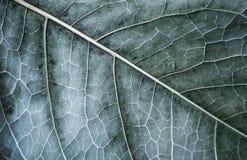 秋天树叶子,与选择聚焦的宏观照片 库存图片