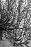 秋天树吊在水中 库存图片