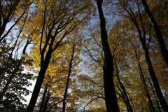 秋天树名列前茅05 库存图片