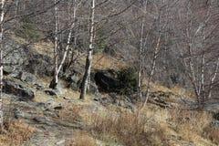 秋天树和地面与下落的叶子 免版税图库摄影