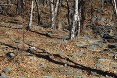秋天树和地面与下落的叶子 库存照片