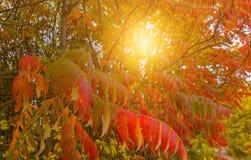 秋天树和太阳 免版税库存照片