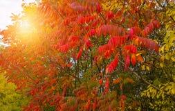 秋天树和太阳 图库摄影