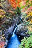 秋天树和小河风景 图库摄影