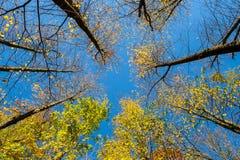 秋天树和明白蓝天 库存照片