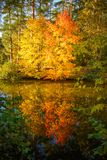 秋天树和池塘照片  免版税库存照片