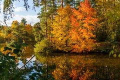 秋天树和池塘照片  库存图片
