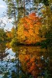 秋天树和池塘照片  库存照片