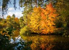 秋天树和池塘照片  免版税库存图片