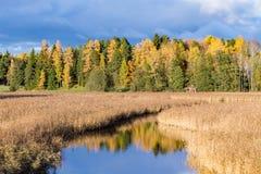 秋天树和河 免版税库存图片