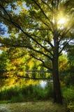 秋天树和湖 库存照片