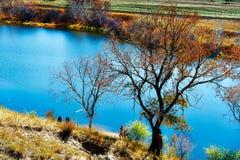 秋天树和湖 免版税库存照片