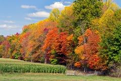 秋天树和玉米田 免版税库存照片