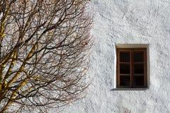 秋天树和窗口,抽象构成 库存照片