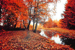 秋天树和红色下落的秋叶地毯在多云天气-秋天五颜六色的风景在葡萄酒颜色 免版税库存照片