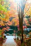 秋天树和道路风景 免版税库存图片