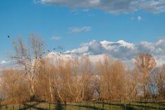秋天树和鸟风景 免版税图库摄影
