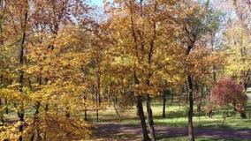 秋天树在一个公园 影视素材