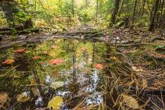 秋天树在一个小森林水坑被反射 免版税库存图片