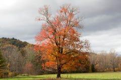 秋天树在一多云天,田纳西 免版税库存图片