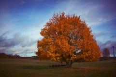 秋天树在乡下 库存照片