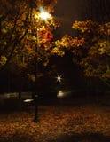 秋天树在公园早期的夜 免版税图库摄影