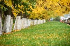 秋天树在公园连续安排了,绿草和黄色叶子 免版税库存照片