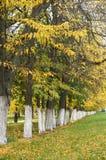 秋天树在公园连续安排了,绿草和黄色叶子 库存图片