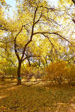 秋天树在公园 库存照片