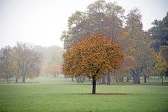 秋天树在公园 免版税库存照片
