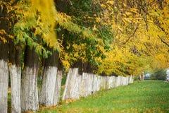 秋天树在城市公园连续安排了,绿草和黄色叶子 库存照片